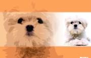 可爱宠物 动物壁纸