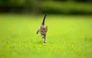 可爱初生的小猫咪 动物壁纸