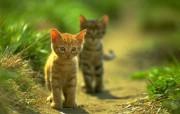 可爱 初生的小猫咪 可爱初生的小猫咪 动物壁纸