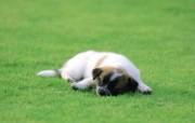 可爱的小狗狗摄影宽屏壁纸 壁纸3 可爱的小狗狗摄影宽屏 动物壁纸