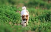 可爱的小狗狗摄影宽屏壁纸 壁纸8 可爱的小狗狗摄影宽屏 动物壁纸