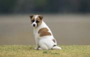 可爱的小狗狗摄影宽屏壁纸 壁纸12 可爱的小狗狗摄影宽屏 动物壁纸