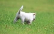 可爱的小狗狗摄影宽屏壁纸 壁纸14 可爱的小狗狗摄影宽屏 动物壁纸