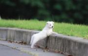 可爱的小狗狗摄影宽屏壁纸 壁纸16 可爱的小狗狗摄影宽屏 动物壁纸