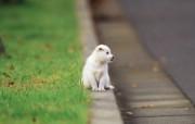 可爱的小狗狗摄影宽屏壁纸 壁纸17 可爱的小狗狗摄影宽屏 动物壁纸