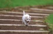可爱的小狗狗摄影宽屏壁纸 壁纸18 可爱的小狗狗摄影宽屏 动物壁纸