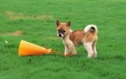 可爱的小狗狗摄影宽屏壁纸 壁纸19 可爱的小狗狗摄影宽屏 动物壁纸