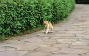 可爱的小狗狗摄影宽屏壁纸 壁纸20 可爱的小狗狗摄影宽屏 动物壁纸
