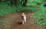 可爱的小狗狗摄影宽屏壁纸 壁纸24 可爱的小狗狗摄影宽屏 动物壁纸