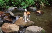 可爱的小狗狗摄影宽屏壁纸 壁纸25 可爱的小狗狗摄影宽屏 动物壁纸