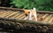 可爱的小狗狗摄影宽屏壁纸 壁纸27 可爱的小狗狗摄影宽屏 动物壁纸