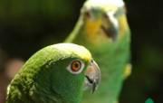 可爱多色彩鹦鹉壁纸 动物壁纸