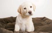 可爱狗狗 高清宽屏壁纸 动物壁纸