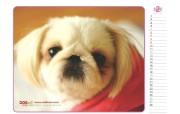可爱狗狗年历壁纸 动物壁纸