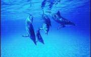 可爱海洋的生灵 动物壁纸