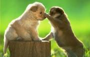 可爱猫猫狗狗系列壁纸 动物壁纸