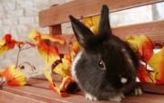 可爱兔子小灰兔壁纸 动物壁纸