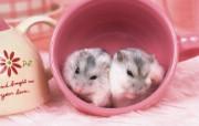 可爱小仓鼠壁纸 动物壁纸