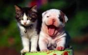可爱小狗壁纸1600X1200 动物壁纸