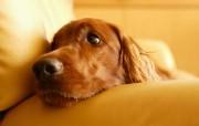 可爱小狗宽频壁纸二 壁纸12 可爱小狗宽频壁纸二 动物壁纸