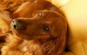 可爱小狗宽频壁纸二 壁纸13 可爱小狗宽频壁纸二 动物壁纸