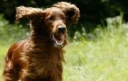 可爱小狗宽频壁纸二 壁纸15 可爱小狗宽频壁纸二 动物壁纸