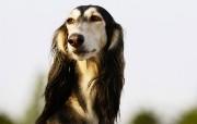 可爱小狗宽频壁纸二 壁纸17 可爱小狗宽频壁纸二 动物壁纸