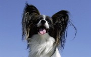 可爱小狗宽频壁纸二 壁纸19 可爱小狗宽频壁纸二 动物壁纸