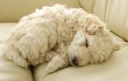 可爱小狗宽频壁纸一 动物壁纸