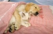 可爱小狗 名犬 宽屏壁纸 壁纸15 可爱小狗(名犬) 宽 动物壁纸