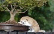 可爱小狗 名犬 宽屏壁纸 壁纸50 可爱小狗(名犬) 宽 动物壁纸