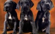 可爱小狗写真 壁纸3 可爱小狗写真 动物壁纸