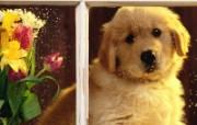 可爱小狗写真 壁纸4 可爱小狗写真 动物壁纸