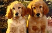 可爱小狗写真 壁纸5 可爱小狗写真 动物壁纸