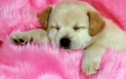 可爱小狗写真 壁纸11 可爱小狗写真 动物壁纸