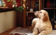 可爱小狗写真 壁纸20 可爱小狗写真 动物壁纸