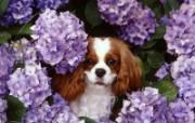 可爱小狗写真 壁纸25 可爱小狗写真 动物壁纸