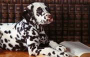 可爱小狗写真 壁纸26 可爱小狗写真 动物壁纸