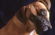 可爱小狗写真 壁纸27 可爱小狗写真 动物壁纸