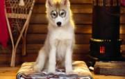 可爱小狗写真 壁纸28 可爱小狗写真 动物壁纸