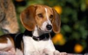 可爱小狗写真 壁纸30 可爱小狗写真 动物壁纸