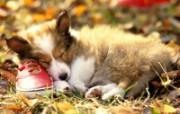 可爱小狗写真 壁纸32 可爱小狗写真 动物壁纸