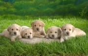 可爱小狗写真壁纸 动物壁纸