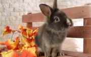 可爱!小灰兔壁纸 动物壁纸