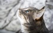 可爱小猫壁纸1920X1200 动物壁纸