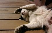 可爱小猫第一辑壁纸 动物壁纸