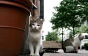 可爱小猫咪桌面壁纸 动物壁纸
