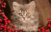 可爱小猫写真壁纸 动物壁纸