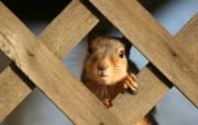 可爱小松鼠壁纸 squirrel 动物壁纸