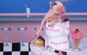 可爱小猪 动物壁纸